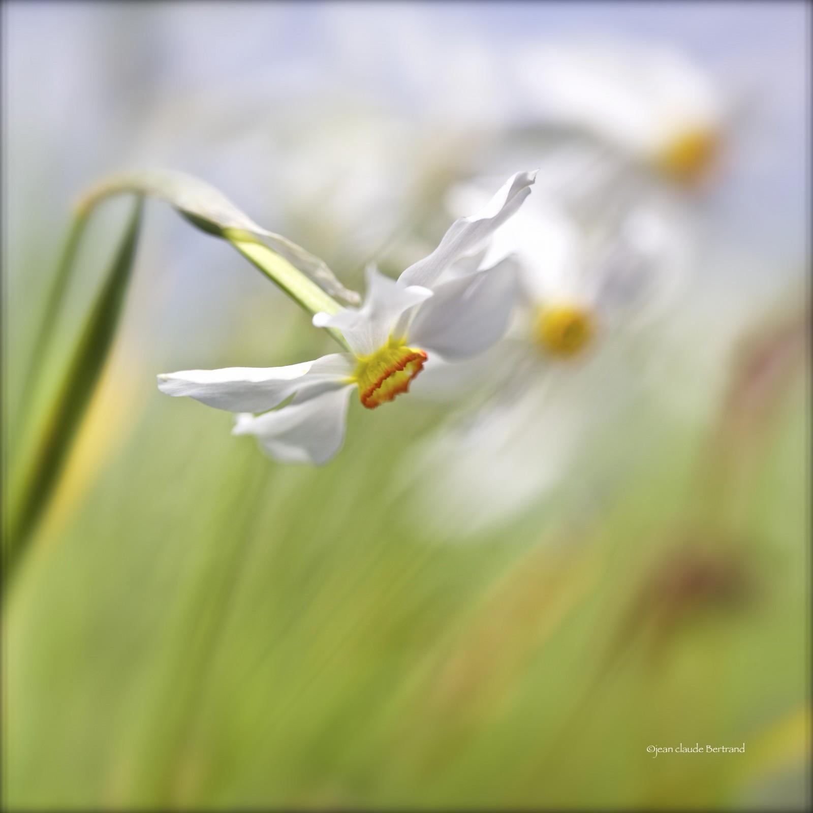 Narcisse des poètes